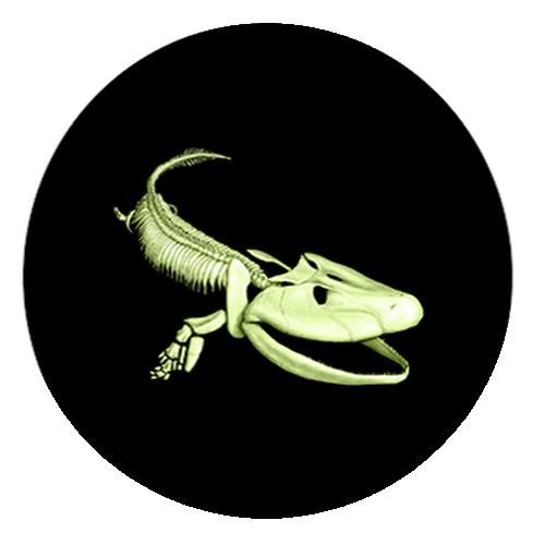 2014_25_cents_Canada_Prehistoric_Creature_Tiktaalik_1
